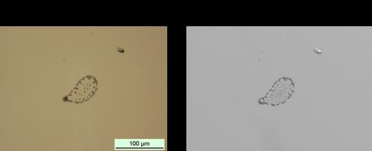 TOF-SIMSの光学像とSEM像
