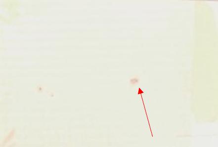 銅張積層板表面の変色部